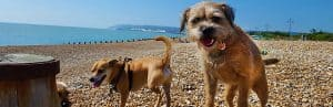 Doggy daycare, Pett Level, Dog Walkers, Fairlight