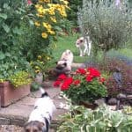 Dog Safe Gardens - Hastings Dog Walkers - Hastings Pet Care - Daycare - Fairlight and Winchelsea