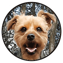 Dog Walking Services in Hastings and St Leonards - Alfie
