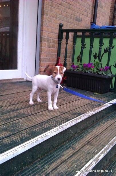 Baby George outside Love Cafe St leonards - Dog Walking