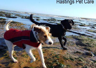 Beach fun - St Leonards and Hastings Dog Walking