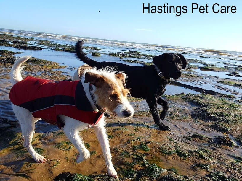 Beach fun - St Leonards and Hastings Dog Walking