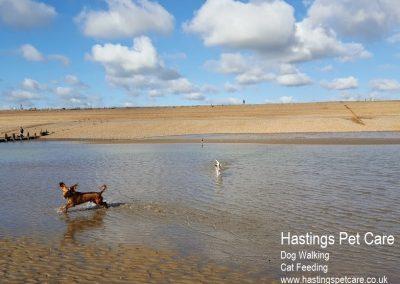 Beautiful Dog Walks. Hastings Pet Care - St Leonards