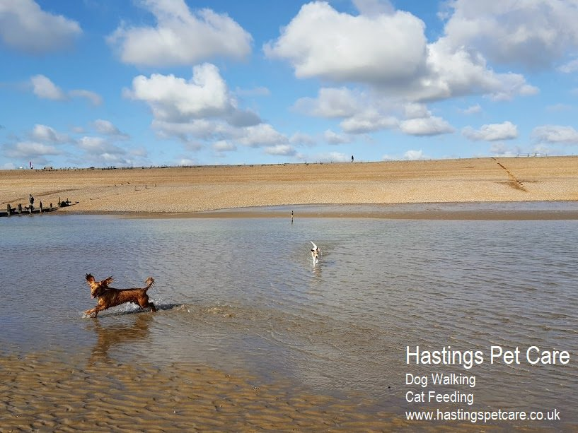 Winchelsea - Beautiful Dog Walks. Hastings Pet Care - St Leonards