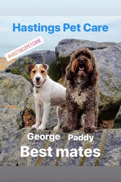 Best Mates Dog Walkers - Hastings St Leonards Fairlight