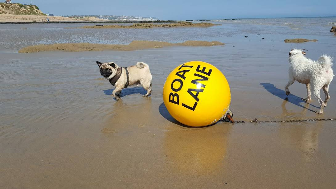 Boat Lane Bouy - Rocky Pug George Parson Terrier Hastings Pet Care - St Leonards - Bexhill