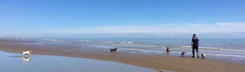Rocky at Winchelsea Beach - Hastings Pet Care