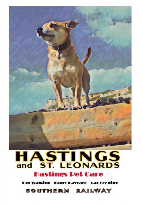 Buster - Hastings Pet Care Dog Walkers - Walking Services St Leonards