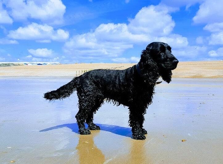 Pett Level - Dog Walking - Hastings Pet Care