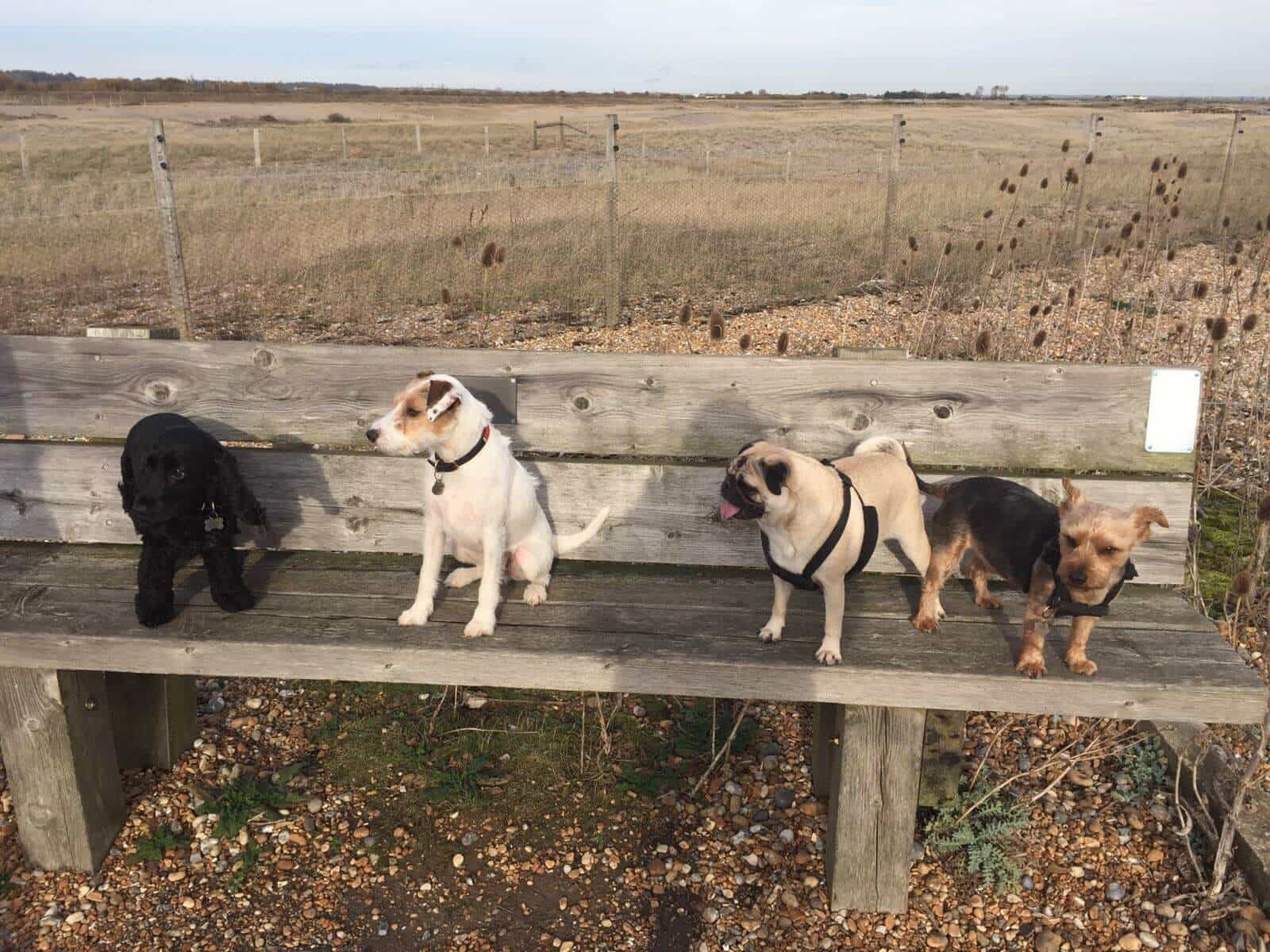 Dog Daycare Hastings - Fairlight St Leonards