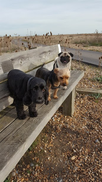 Dog Daycare Walkers Hastings Fairlight St Leonards