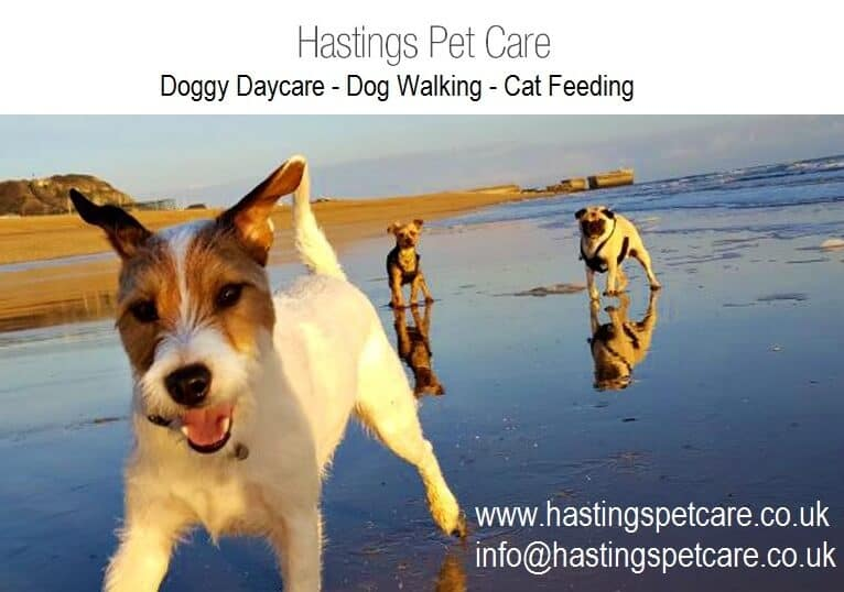 Dog Walker Fairlight Hastings and St Leonards
