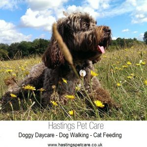 St Leonards and Hastings Dog Daycare and Walking Services Dog Walker