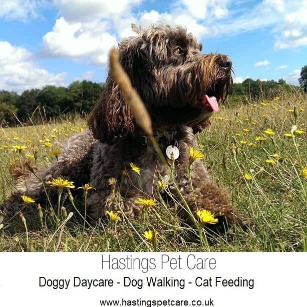 Dog Walker Hastings Daycare St Leonards Fairlight