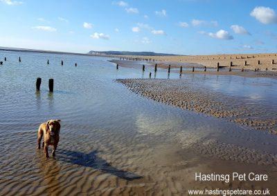 Dog Walker Hastings - St Leonards
