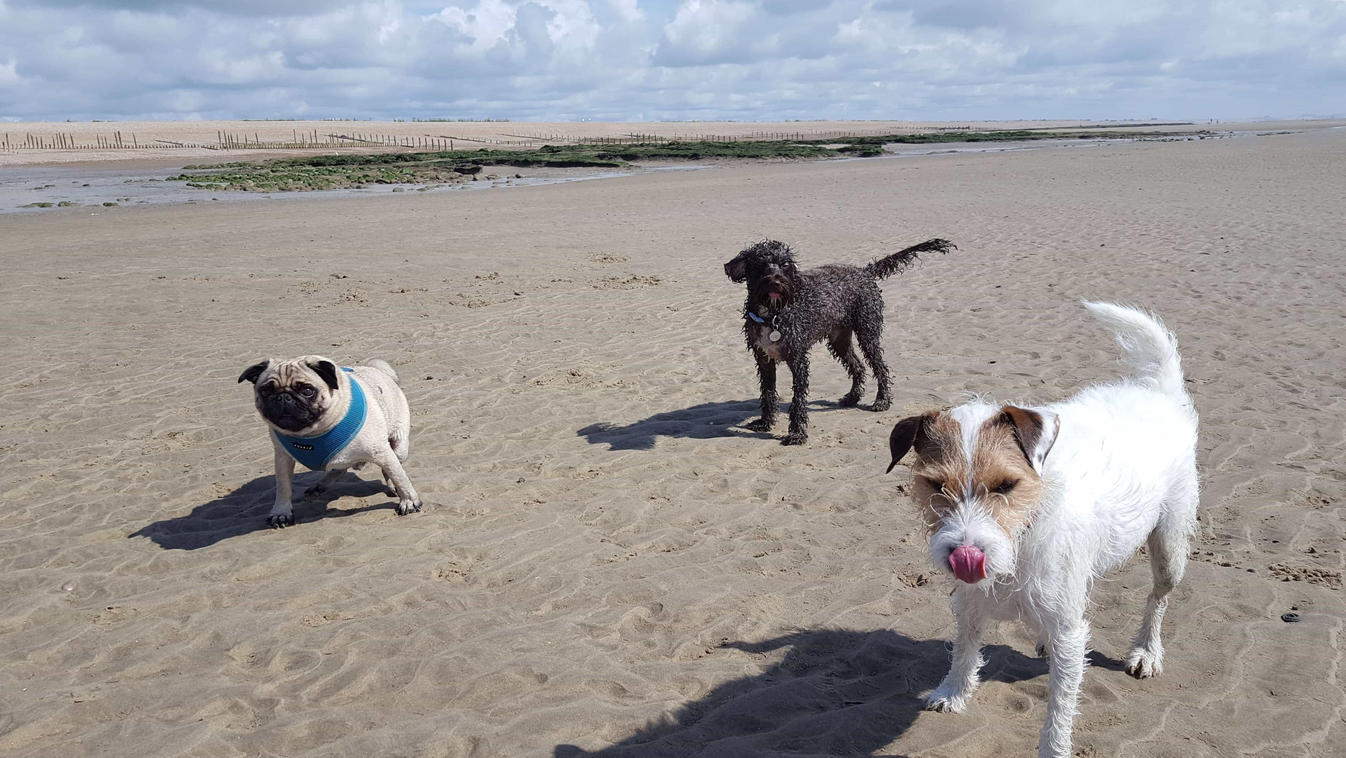 Dog Walkers Daycare Hastings St Leonards