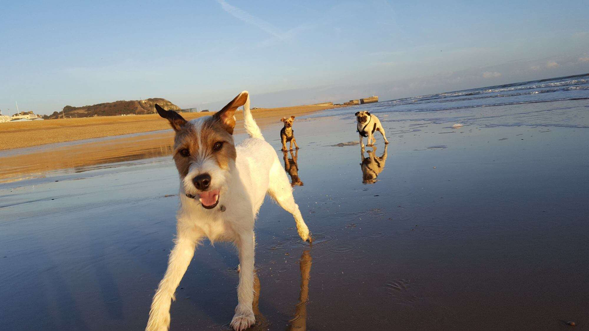 St Leonards Dog Walkers - Hastings Pet Care