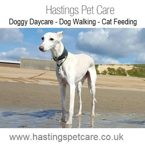 Best Dog Walkers Hastings St Leonards Fairlight