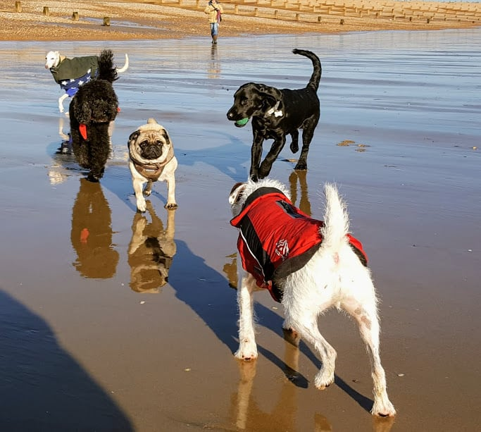 Hastings Pet Care - Dog Walking Services - St Leonards Fairlight