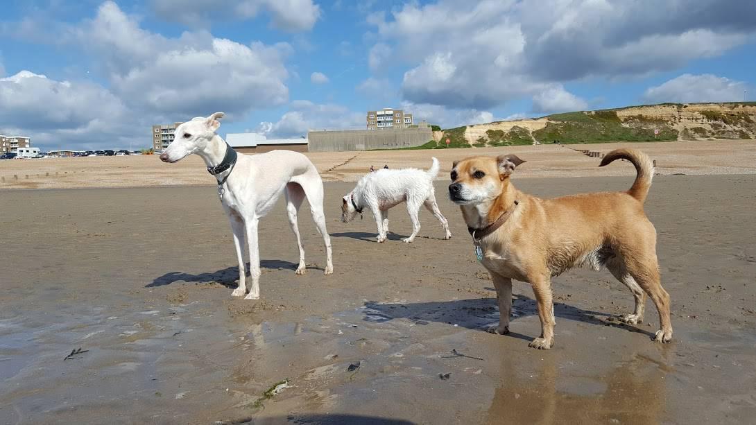 Dog Walking Adventures - Hastings Pet Care - Walkers - St Leonards