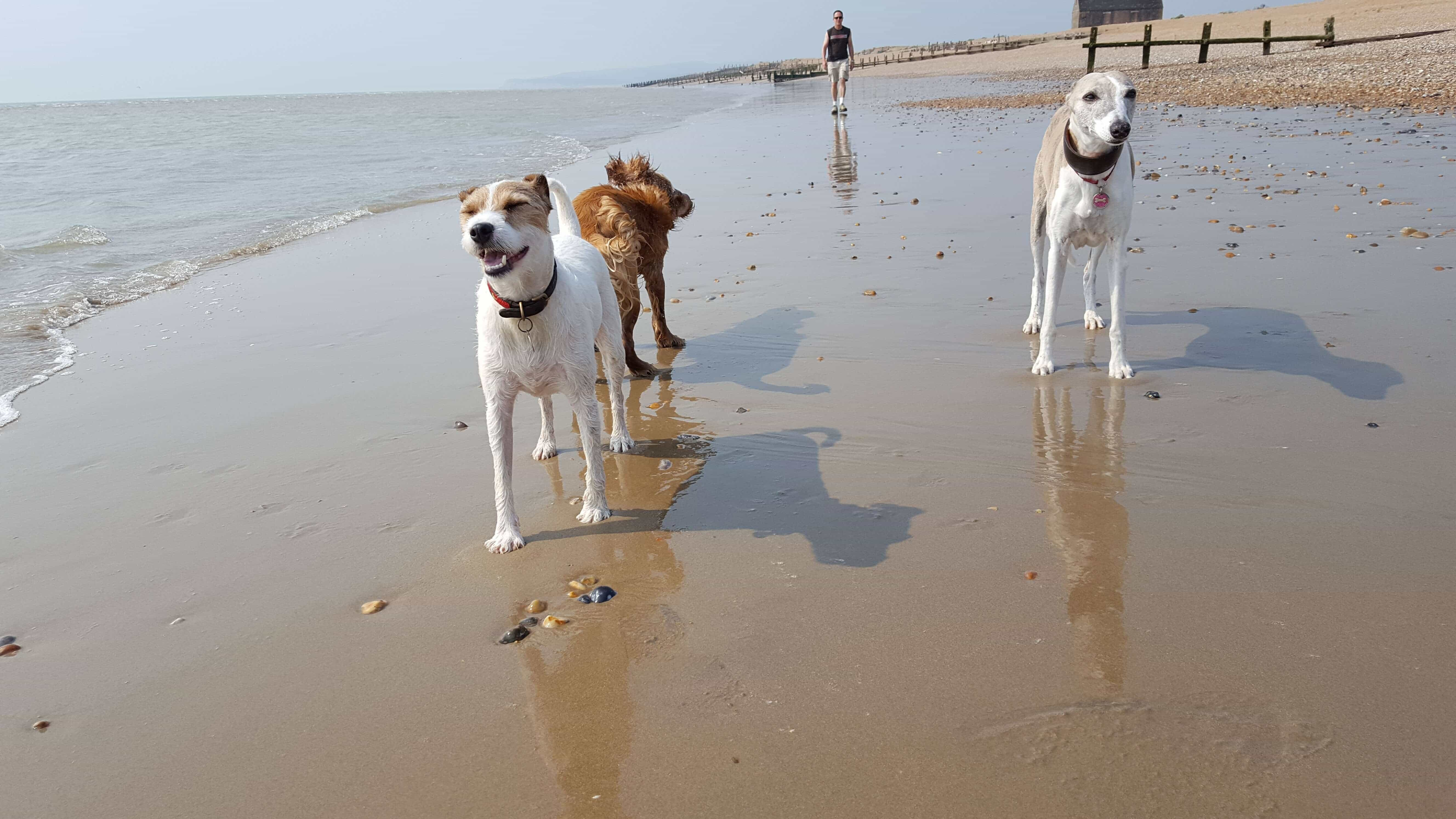 Dog Walking Services Hastings East Sussex