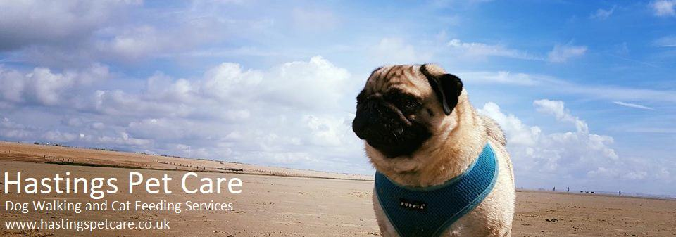 Winchelsea Beach - Pug - Dog Walkers Hastings St Leonards-on-sea Fairlight
