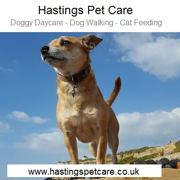 Dog Walking Services St Leonards Hastings East Sussex