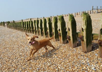 Dog Walkers Hastings Doggy Daycare
