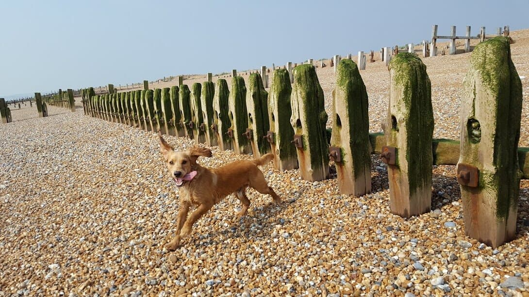 Bexhill Dog Walkers - Hastings Pet Care