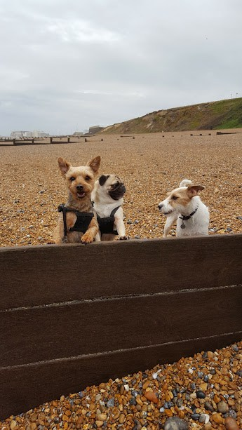 Doggy Daycare Hastings St Leonards Fairlight