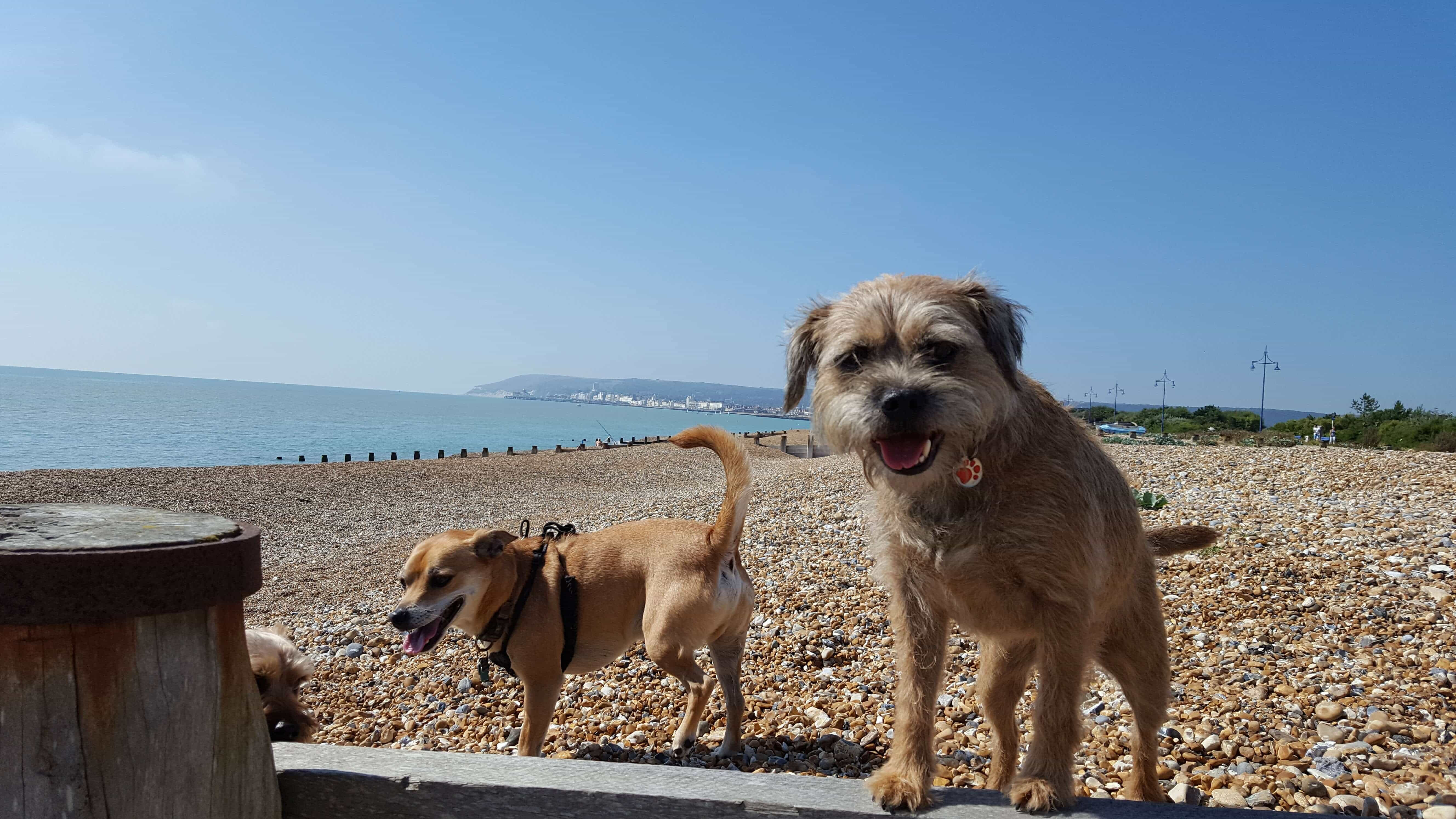 Doggy Daycare Pett Level St Leonards Ore Fairlight Hastings
