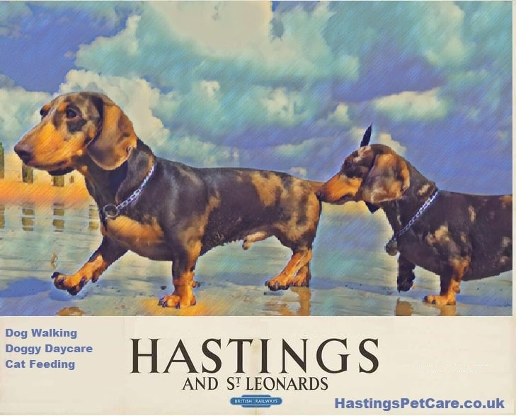 Doxies - St Leonards Fairlight Dog Walkers - Hastings Pet Care - Dog Walking