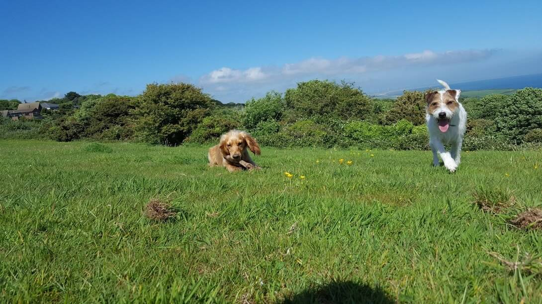 Fairlight Country Park - Dog Walkers