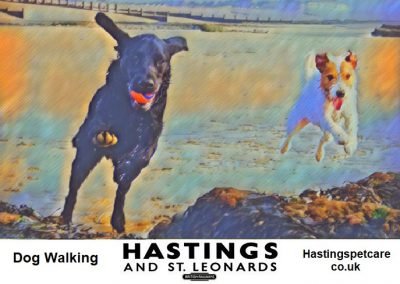 St Leonards and Hastings Dog Walkers