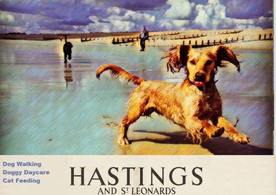 Dog Walking Services Hastings