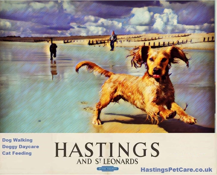 Fairlight Hastings St Leonards Bexhill dog Walkers Milton