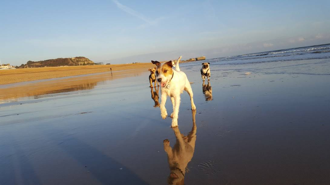three dogs walking on beach in Hastings East Sussex