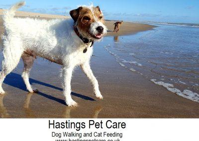 Essential St Leonards George - Hastings Pet Care - Dog Walkers St Leonards
