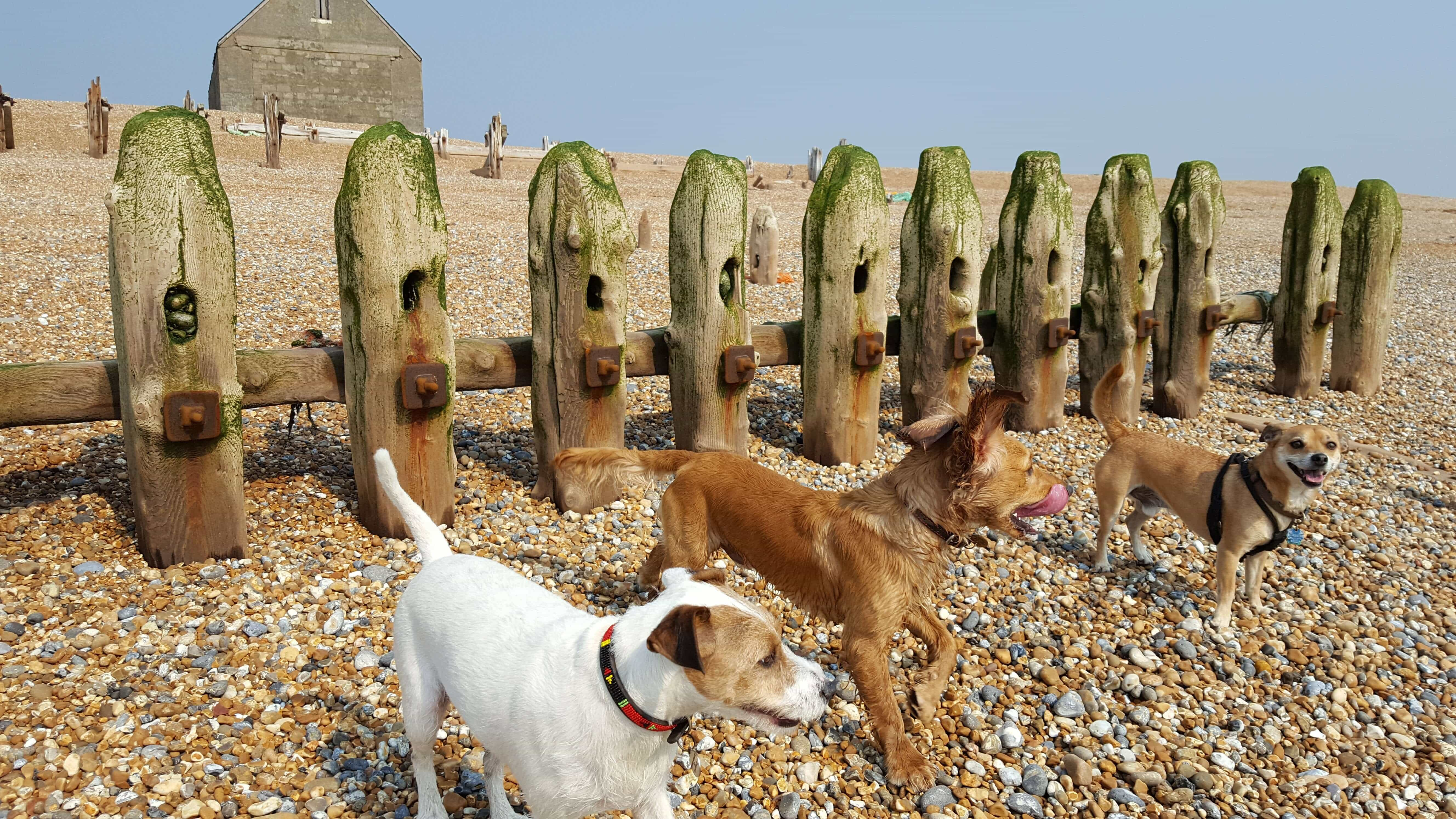 Hastings Dog Daycare and Walking St Leonards Battle Ore and Fairlight Bexhill