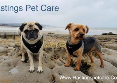 Hastings Pet Care - Dog Walker - St Leonards and Fairlight