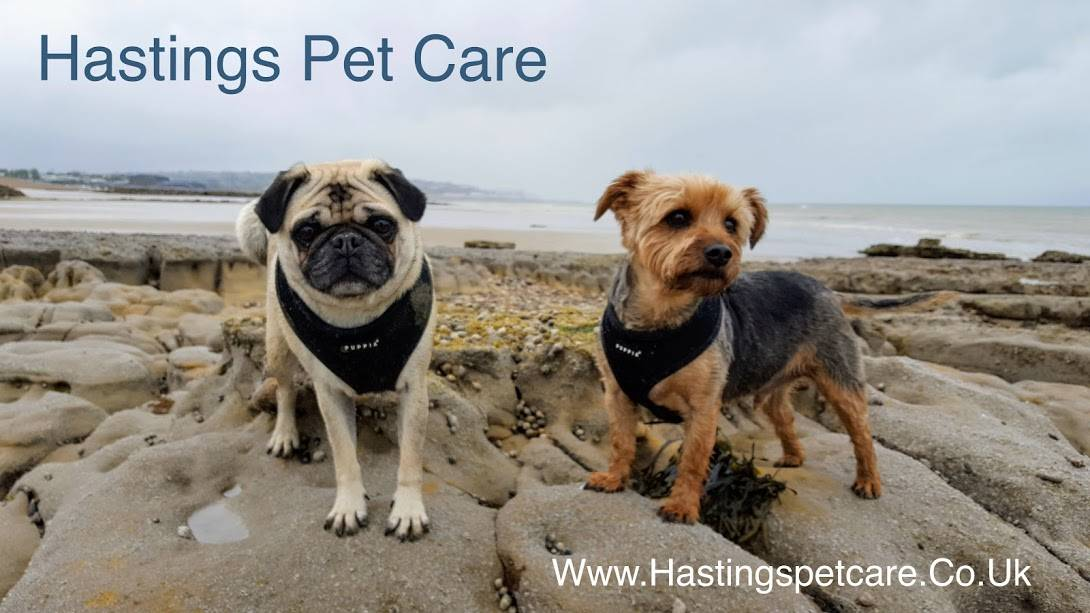 Hastings Pet Care - St Leonards - Dog Walkers