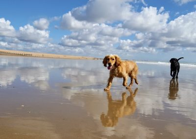 Hastings Pet Care - Dog Walking - St Leonards and Fairlight