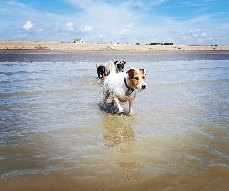 Hastings Pet Care - Dog Walking at Winchelsea Beach / Pett