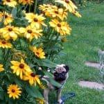 Fairlight Doggy Daycare - Dog safe Gardens