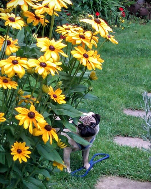 Dog Tips - Making the Garden Safe - Hastings Pet Care