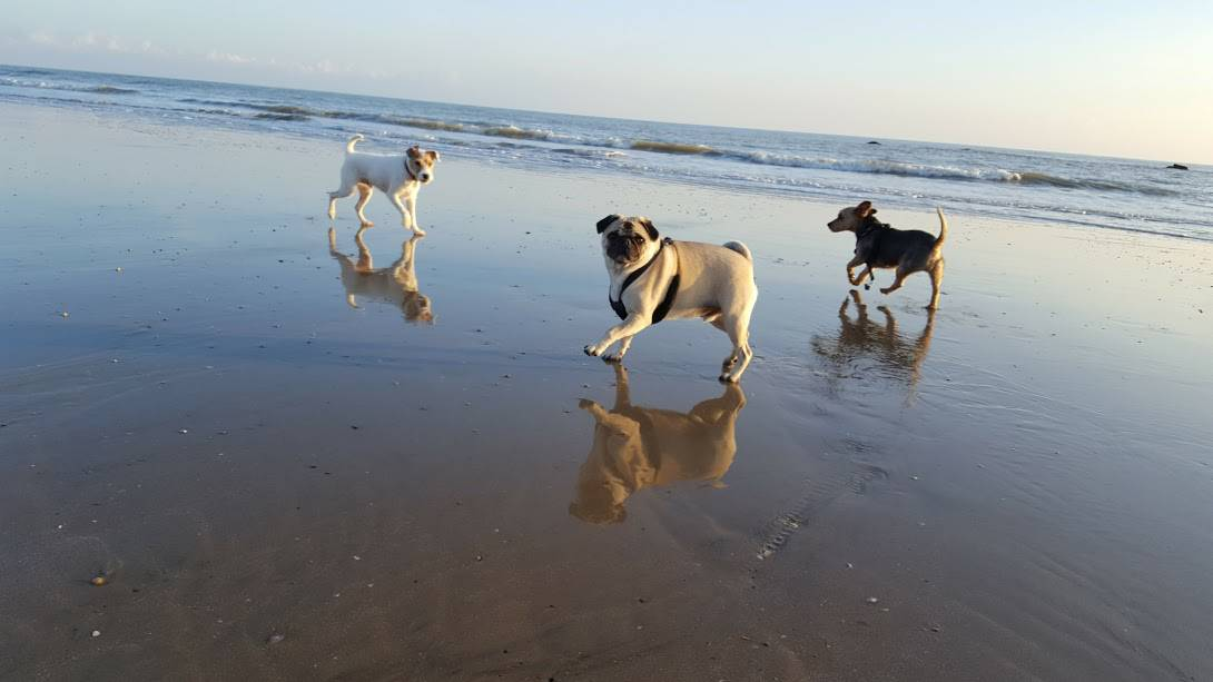 Hastings and St Leonards Dog Walker on Pelham Beach