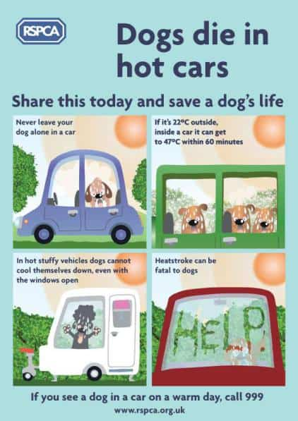 Dogs in hot weather - Heatstroke - Safety