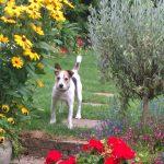 Lovely Bert - Dog Daycare St Leonards Fairlight Hastings