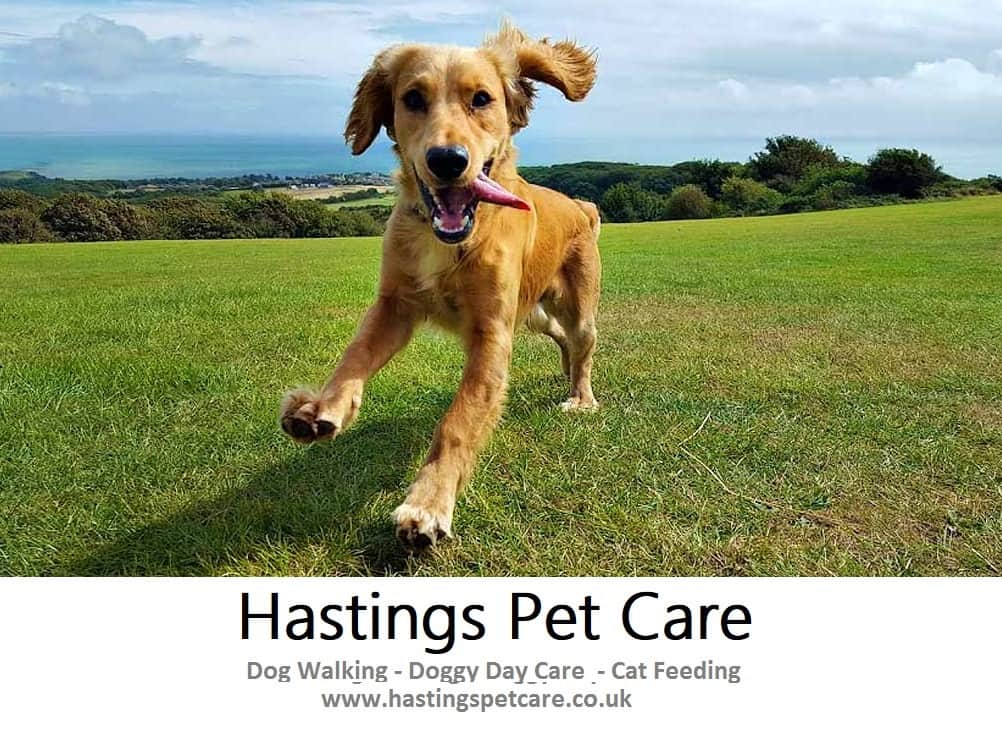 Dog Walking Services St Leonards Hastings