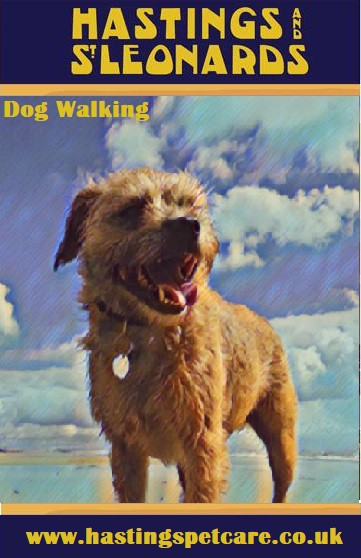 Pooch Mutt Hound Mans Best Friend - Hastings and St Leonards Dog Walkers